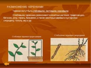 РАЗМНОЖЕНИЕ ЧЕРЕНКАМИ Черенки могут быть стеблевыми, листовыми, корневыми.