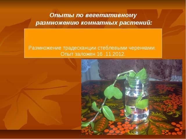 Опыты по вегетативному размножению комнатных растений: Размножение традесканц...