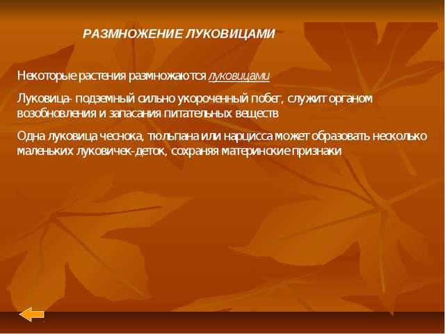 РАЗМНОЖЕНИЕ ЛУКОВИЦАМИ  Некоторые растения размножаются луковицами Луковица-...