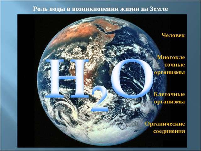 Роль воды в возникновении жизни на Земле Человек Многокле точные организмы Кл...