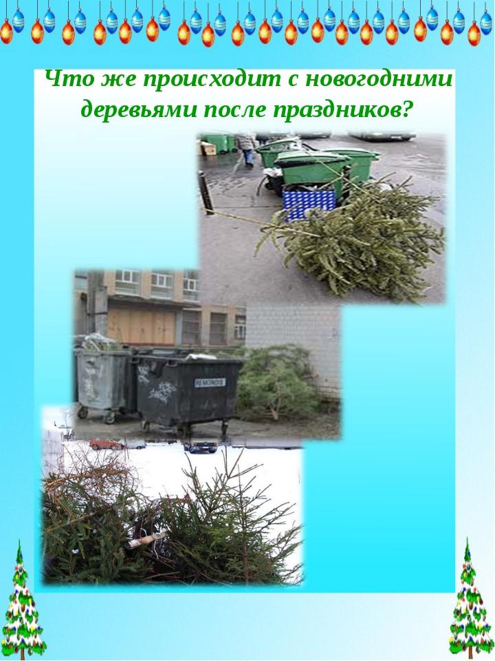 Что же происходит с новогодними деревьями после праздников?
