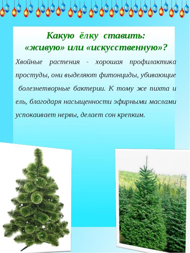Какую ёлку ставить: «живую» или «искусственную»? Хвойные растения - хорошая...