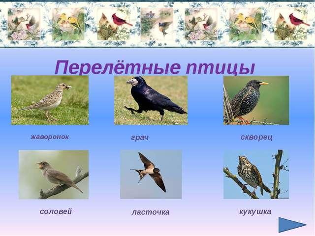 Перелётные птицы жаворонок грач скворец соловей ласточка кукушка