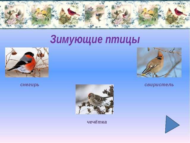 Птицы перелётные зимующие осёдлые