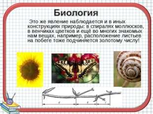 Это же явление наблюдается и в иных конструкциях природы: в спиралях моллюск