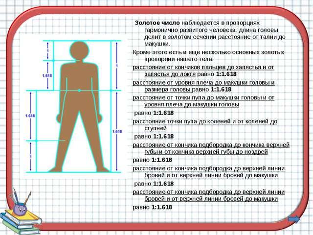 Золотое число наблюдается в пропорциях гармонично развитого человека: длина...