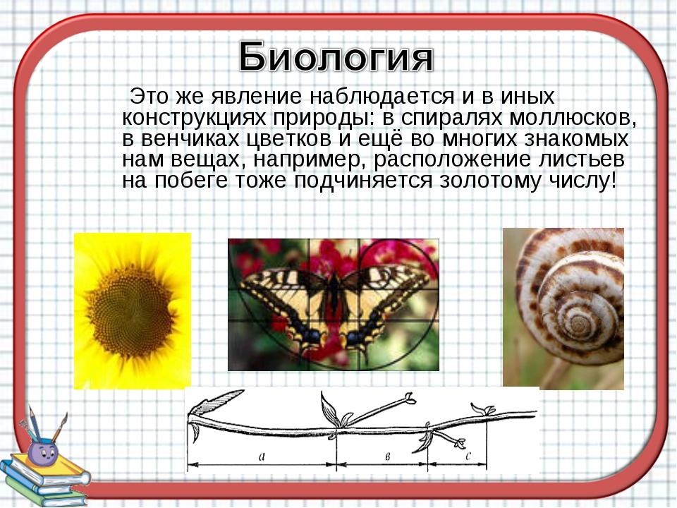 Это же явление наблюдается и в иных конструкциях природы: в спиралях моллюск...