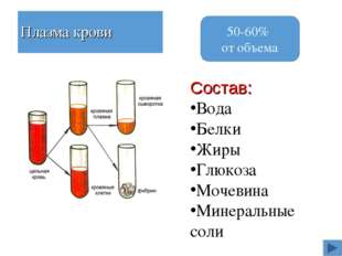 Плазма крови Состав: Вода Белки Жиры Глюкоза Мочевина Минеральные соли 50-60%