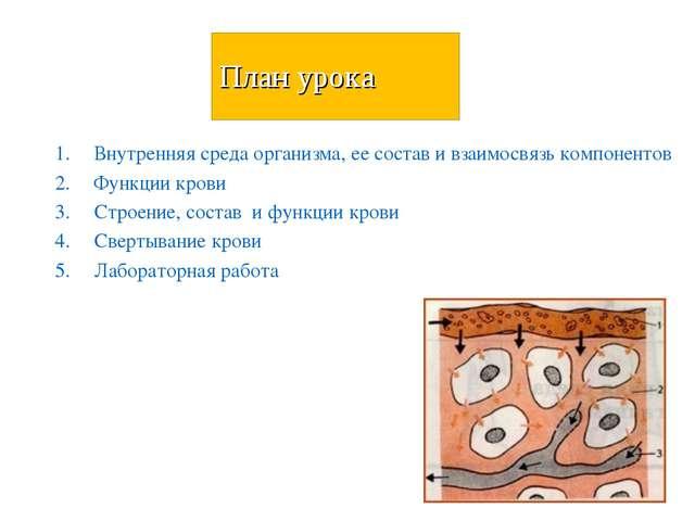 План урока Внутренняя среда организма, ее состав и взаимосвязь компонентов Фу...