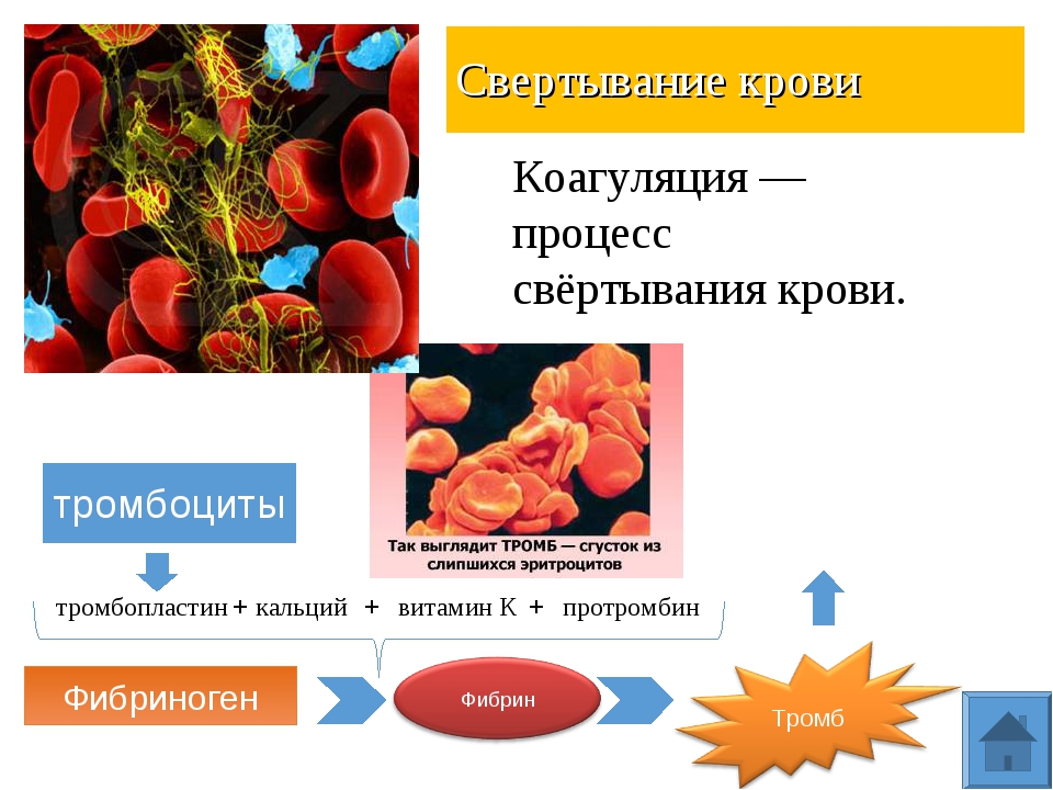 Свертывание крови тромбоциты тромбопластин кальций витамин К протромбин + + +...