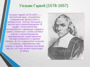 Уильям Гарвей (1578-1657) Уильям Гарвей (1578-1657) — английский врач, основа