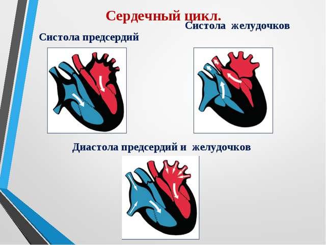 Сердечный цикл. Систола предсердий Систола желудочков Диастола предсердий и ж...