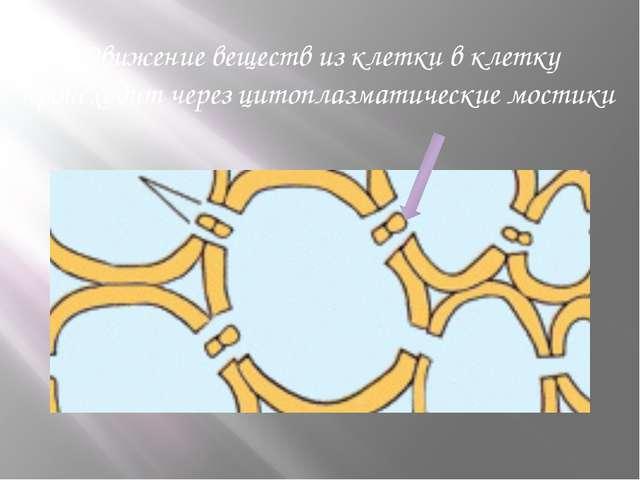 Движение веществ из клетки в клетку происходит через цитоплазматические мостики