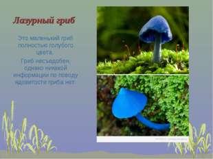 Лазурный гриб Это маленький гриб полностью голубого цвета. Гриб несъедобен, о