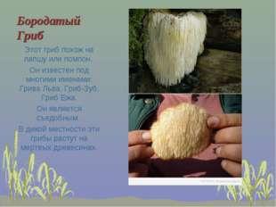 Бородатый Гриб Этот гриб похож на лапшу или помпон. Он известен под многими и