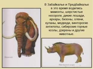 В Забайкалье и Предбайкалье в это время водились мамонты, шерстистые носороги