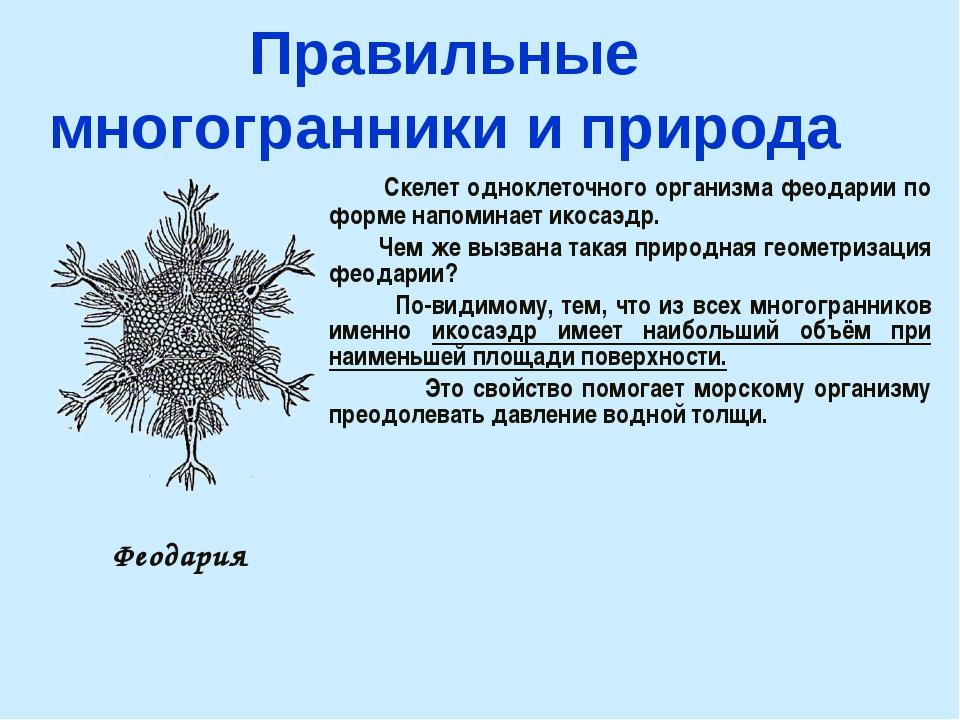Правильные многогранники и природа Скелет одноклеточного организма феодарии п...
