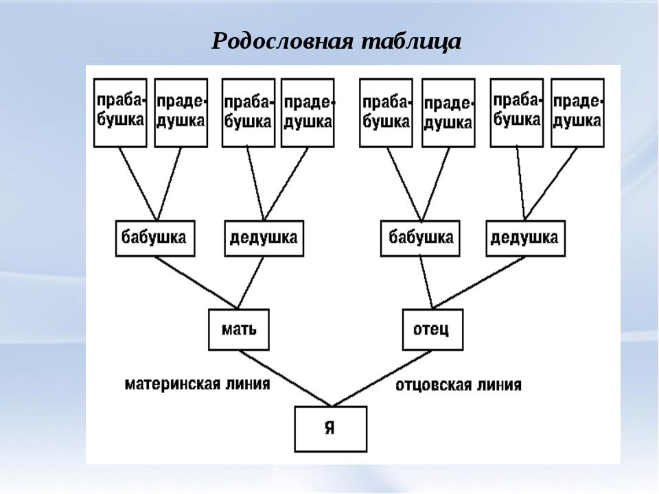 Генеалогическое древо в ворде как сделать