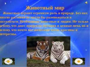 Охрана животных Сейчас люди всего мира поняли, что животные нашей планеты в о