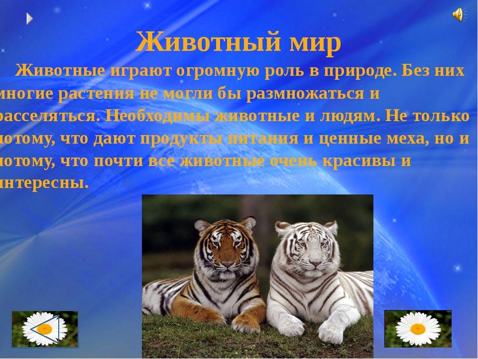 Охрана животных Сейчас люди всего мира поняли, что животные нашей планеты в о...