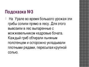 Подсказка №3 На Урале во время большого урожая эти грибы солили прямо в лесу.