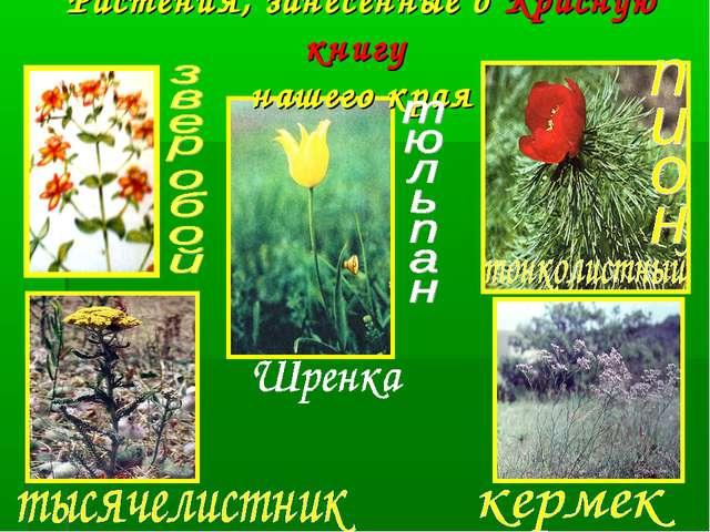 Растения, занесённые в Красную книгу нашего края