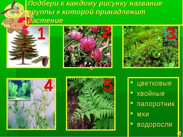 Подбери к каждому рисунку название группы к которой принадлежит растение цвет...
