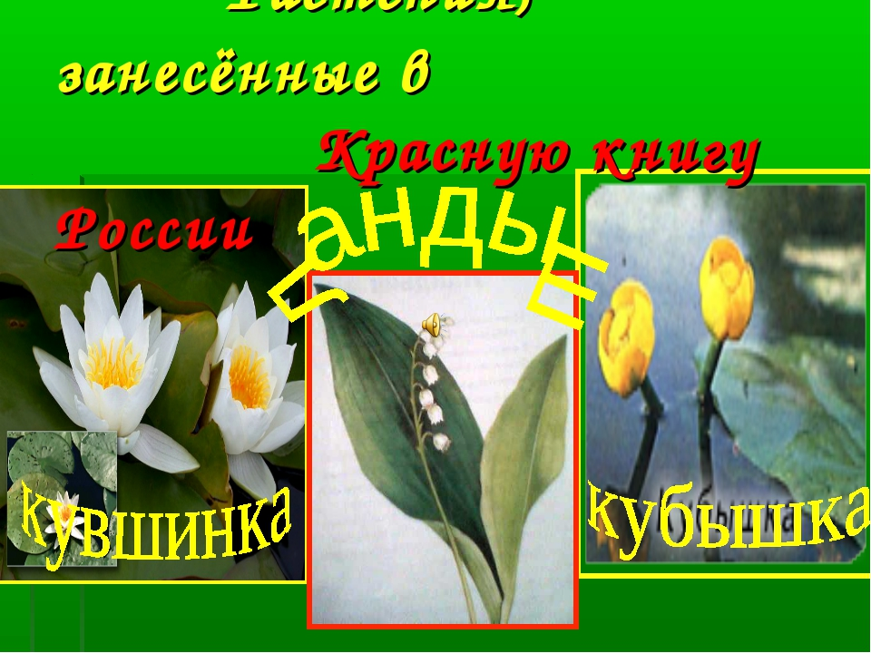 Растения, занесённые в Красную книгу России