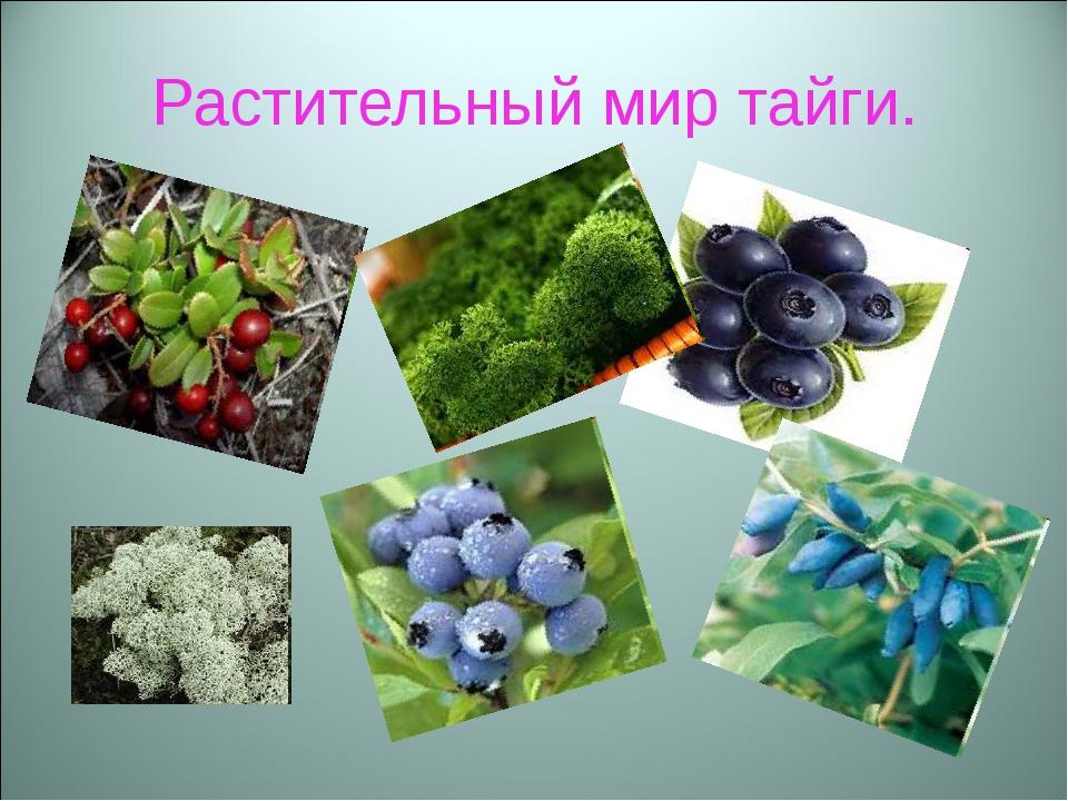 Растительный мир тайги.