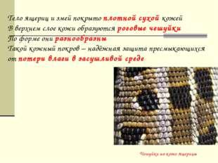 Чешуйки на коже ящерицы Тело ящериц и змей покрыто плотной сухой кожей В верх