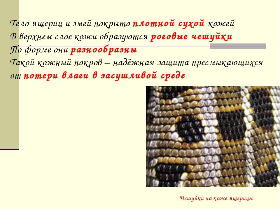 Чешуйки на коже ящерицы Тело ящериц и змей покрыто плотной сухой кожей В верх...