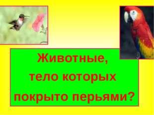 Животные, тело которых покрыто перьями?
