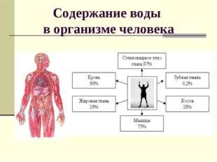 Содержание воды в организме человека .