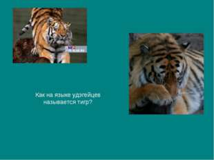 Как на языке удэгейцев называется тигр?