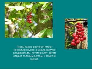 Ягоды какого растения имеют несколько вкусов: сначала кажутся сладковатыми, п