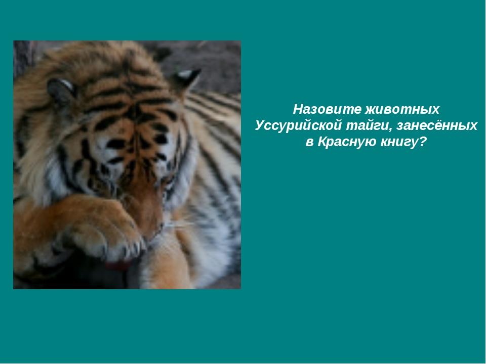 Назовите животных Уссурийской тайги, занесённых в Красную книгу?