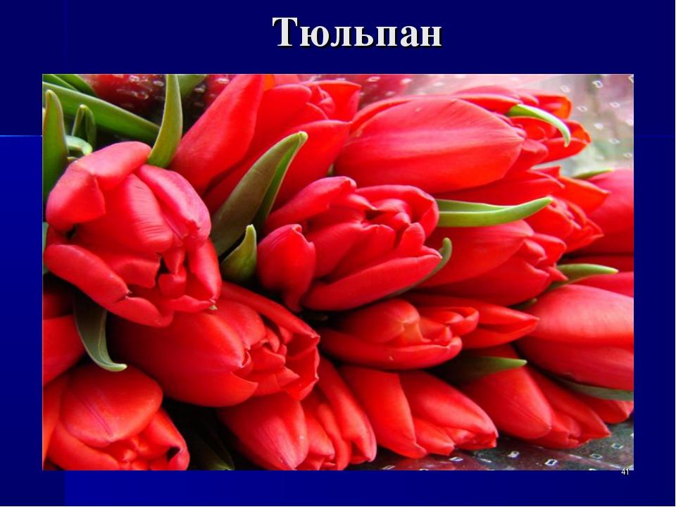 Тюльпан *