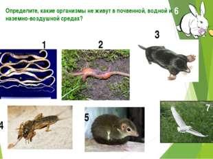 Определите, какие организмы не живут в почвенной, водной и наземно-воздушной