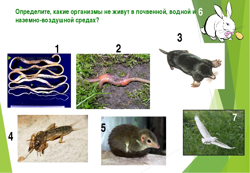 Определите, какие организмы не живут в почвенной, водной и наземно-воздушной...