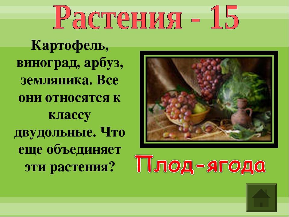Картофель, виноград, арбуз, земляника. Все они относятся к классу двудольные....