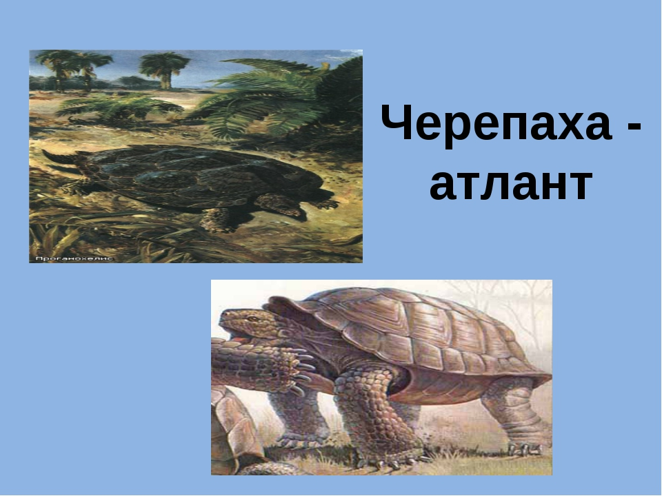 Черепаха - атлант