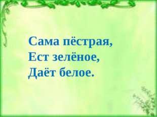 Сама пёстрая, Ест зелёное, Даёт белое.