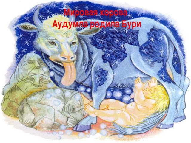 Мировая корова Аудумла родила Бури