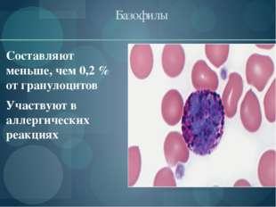 Базофилы Составляют меньше, чем 0,2% от гранулоцитов Участвуют в аллергичес