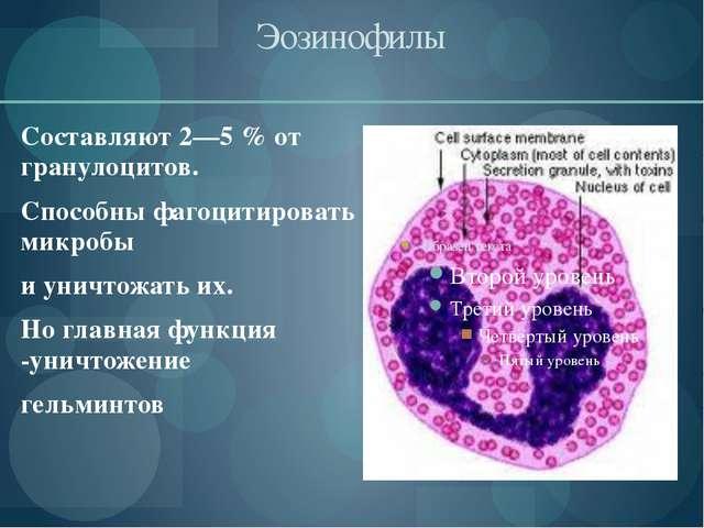 Эозинофилы Составляют 2—5% от гранулоцитов. Способны фагоцитировать микробы...