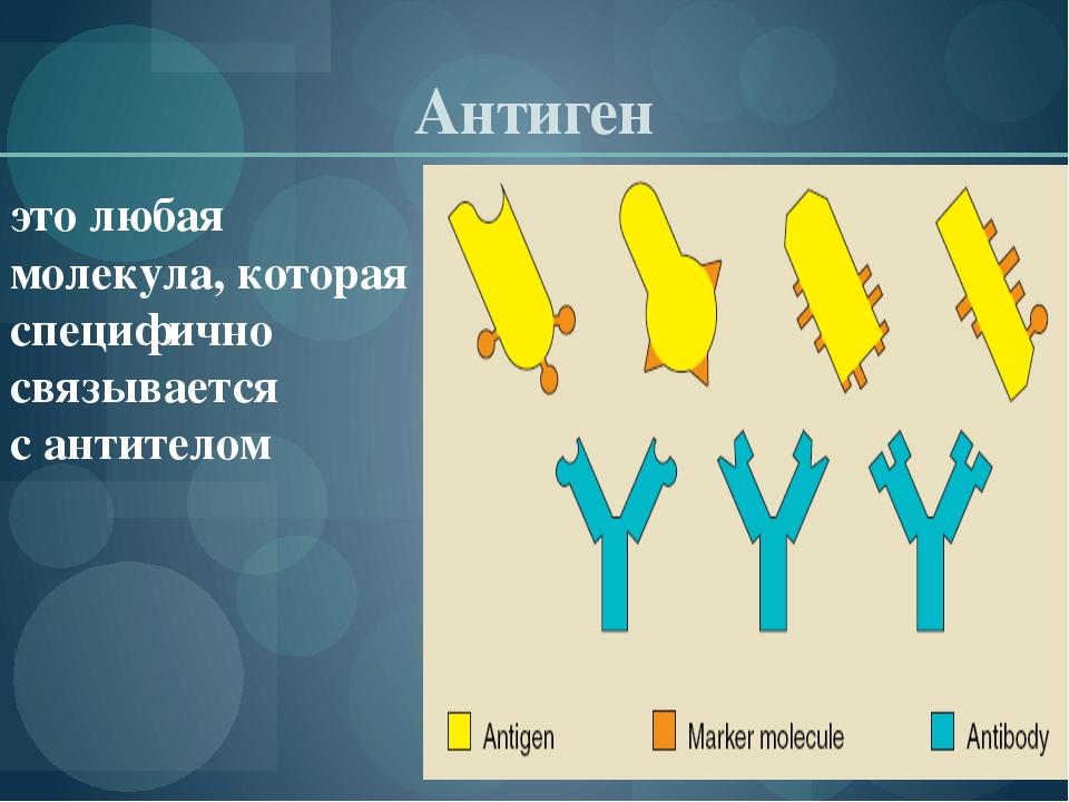Антиген это любая молекула, которая специфично связывается сантителом