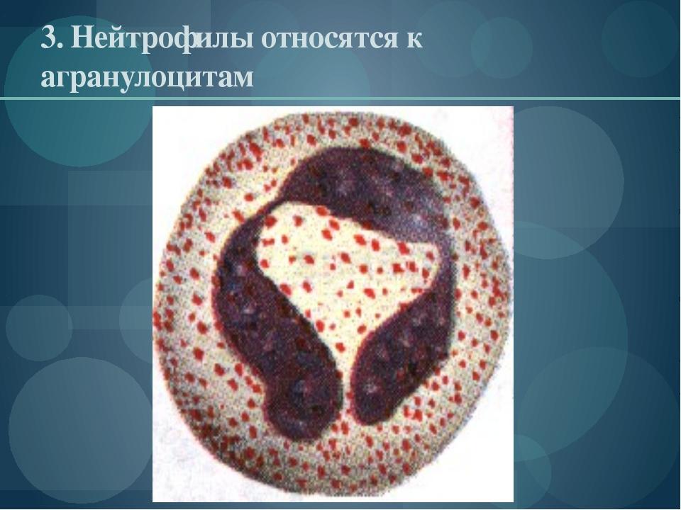 3. Нейтрофилы относятся к агранулоцитам