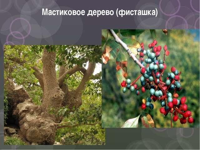 Мастиковое дерево (фисташка)