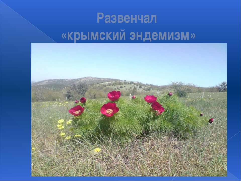 Развенчал «крымский эндемизм»