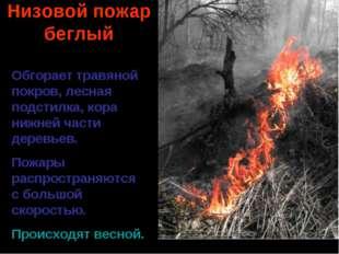 Низовой пожар беглый Обгорает травяной покров, лесная подстилка, кора нижней